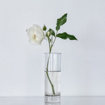White Rose in Glass